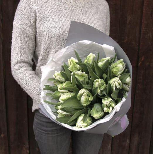 букет из бело-зеленых тюльпанов (1)