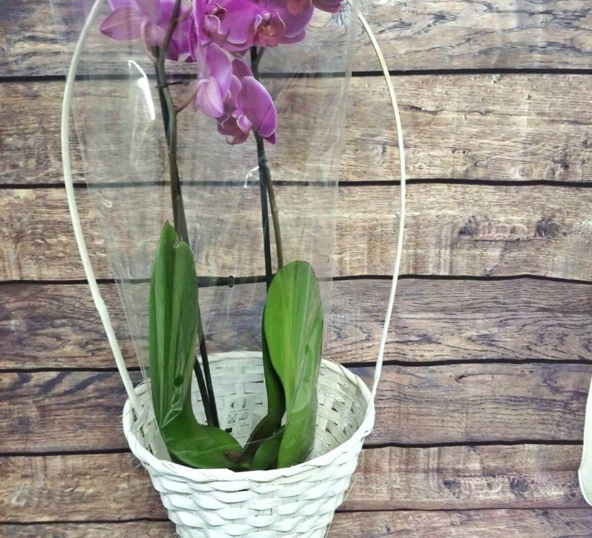 Орхидея фаленопсис в корзинке — 376
