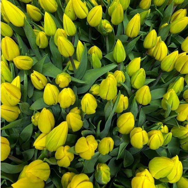 Тюльпан желтый 387