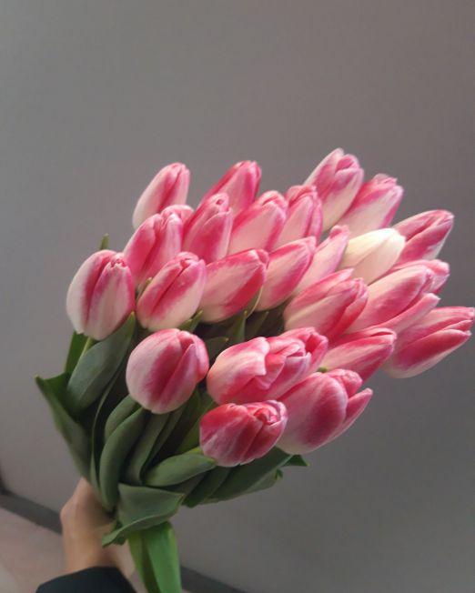 тюльпан 11 (1)