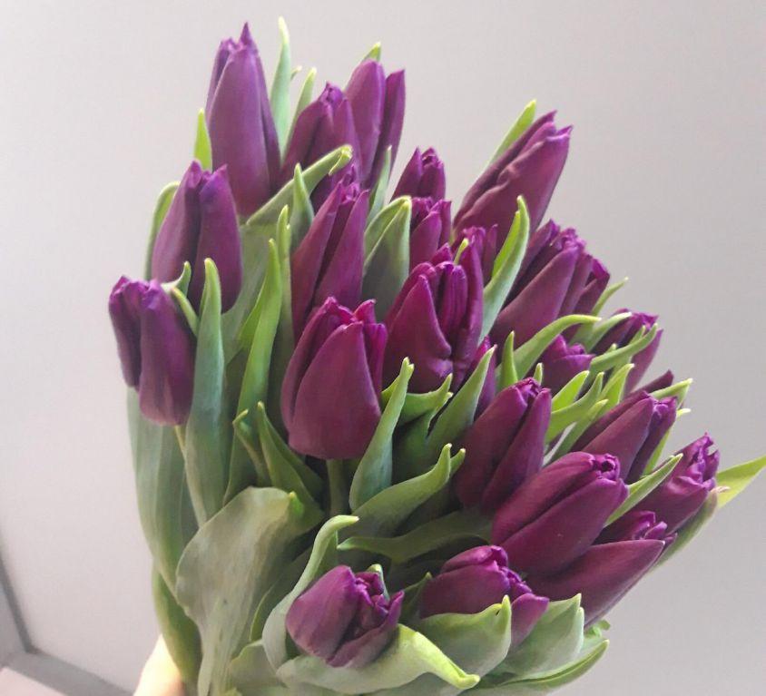 Тюльпан фиолетовый 389