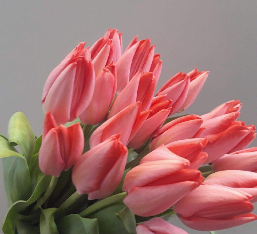 Тюльпан розовый 394