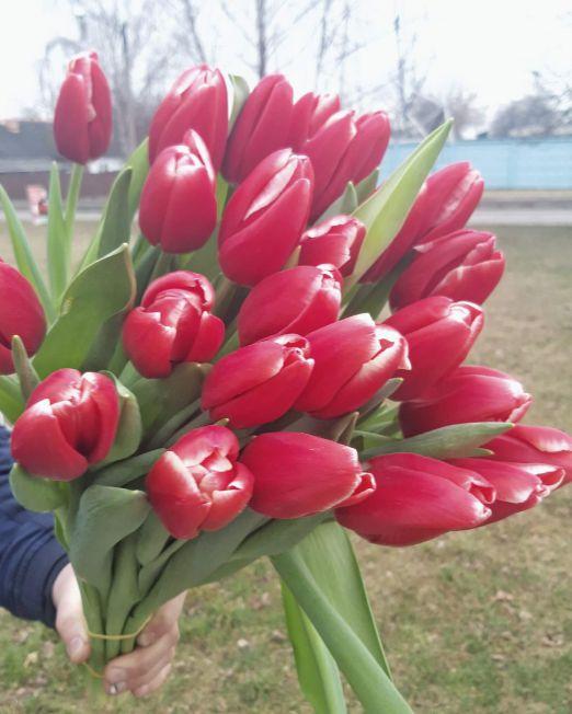 тюльпан 15 (1)