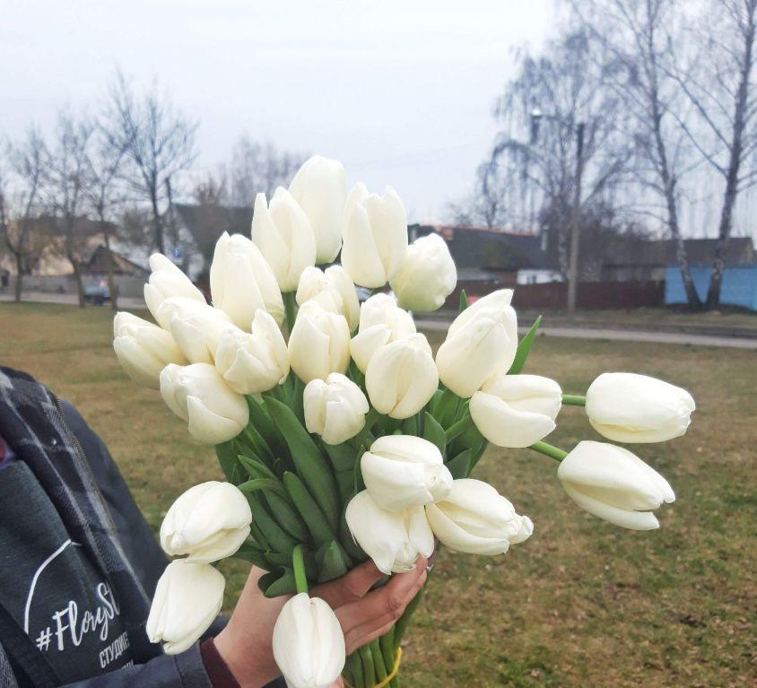 Тюльпан белый 390