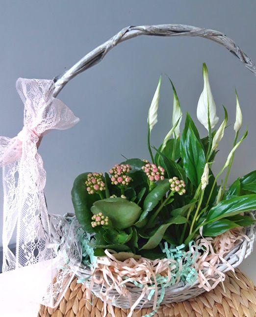 набор из горшечных растений в корзинке_18