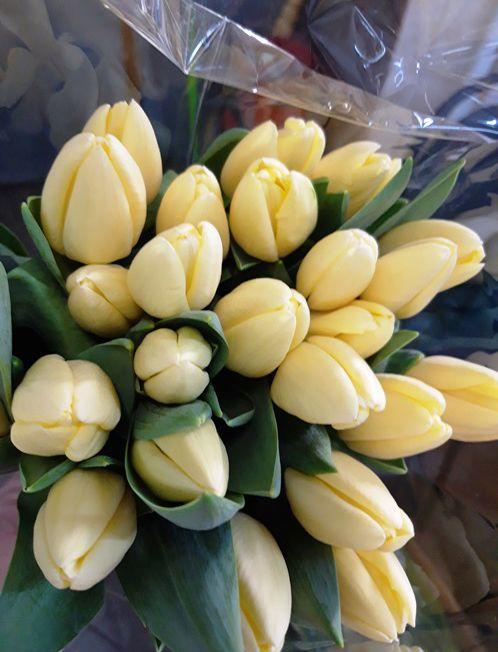тюльпан лимонного оттенка