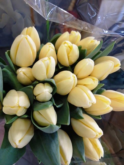 Тюльпан лимонный 625