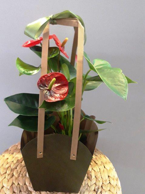 Набор из горшечных растений в сумочке 462