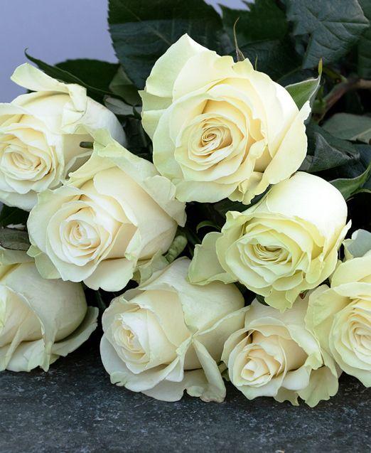 букет из 9 роз мондиаль
