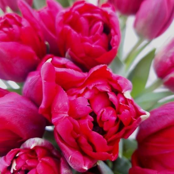 Букет сборный из 21 пионовидных тюльпанов 244