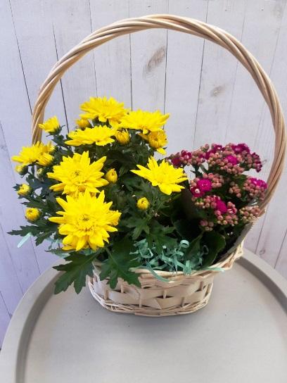 Набор из горшечных растений в корзине 457